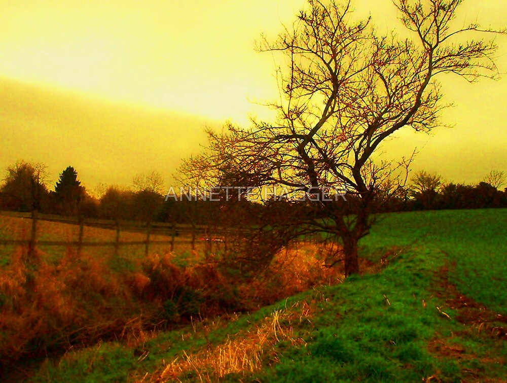 autumn light by ANNETTE HAGGER
