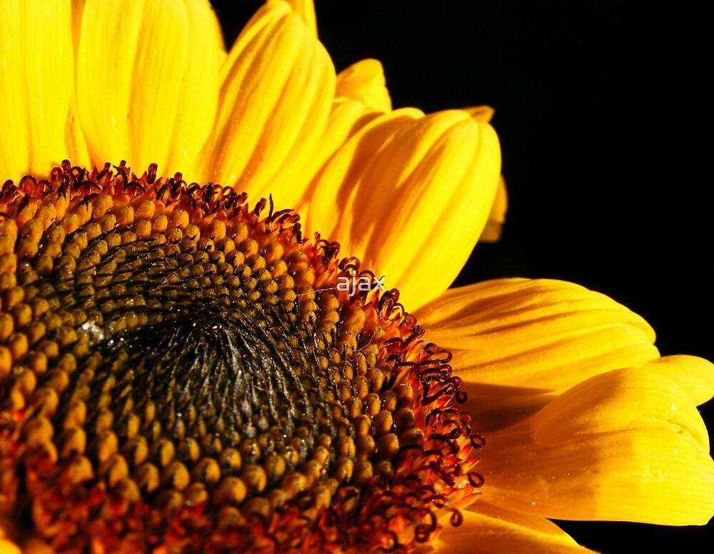 sunny by ajax