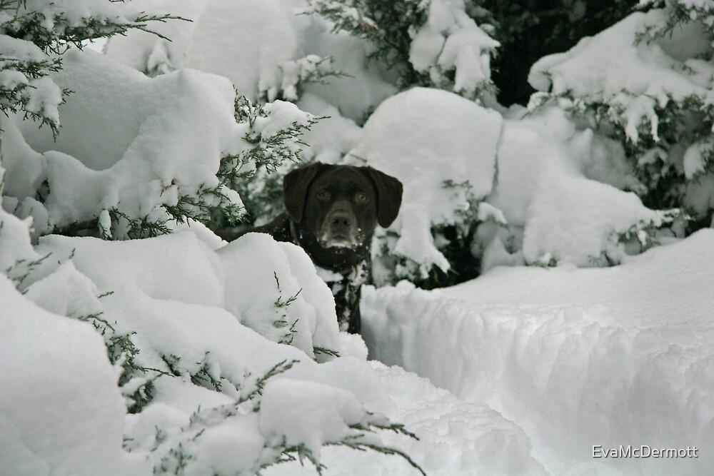 Snow Plow by EvaMcDermott