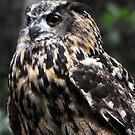 Eagle Owl by Anne Smyth
