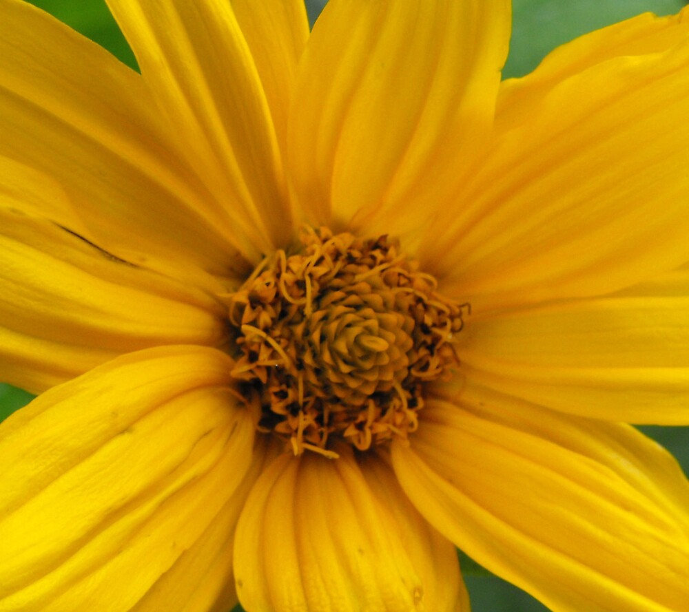 Yellow Flower by ChristineArt