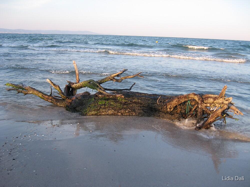 tree at the shore by Lidiya