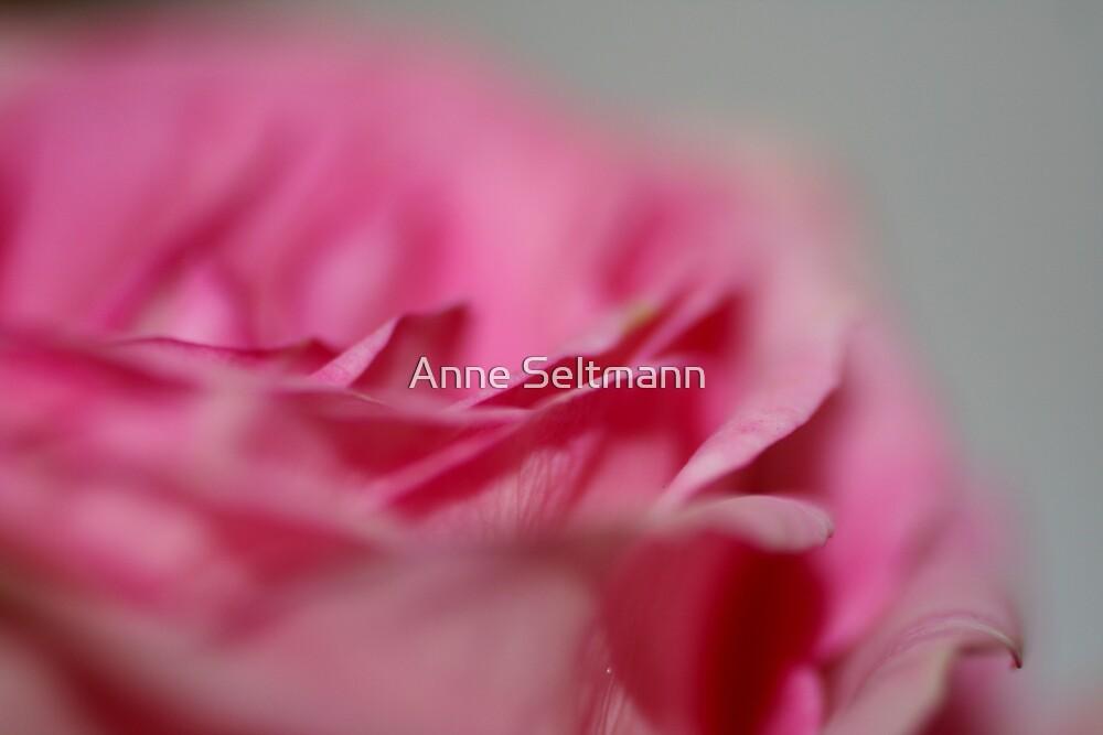 Rose Garden by Anne Seltmann