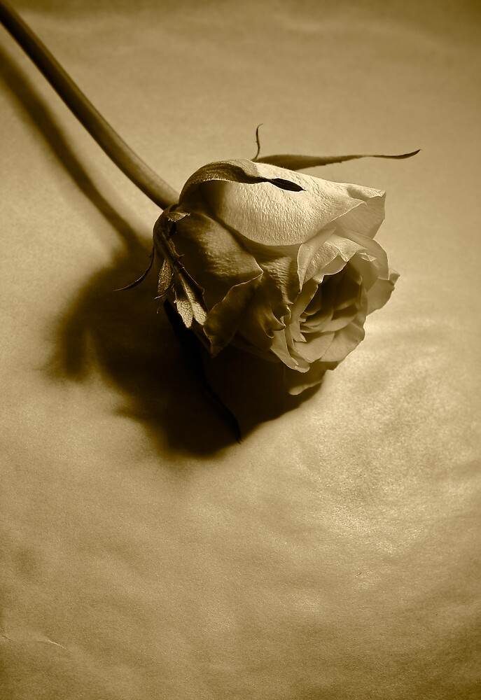 For love won and lost by mausue