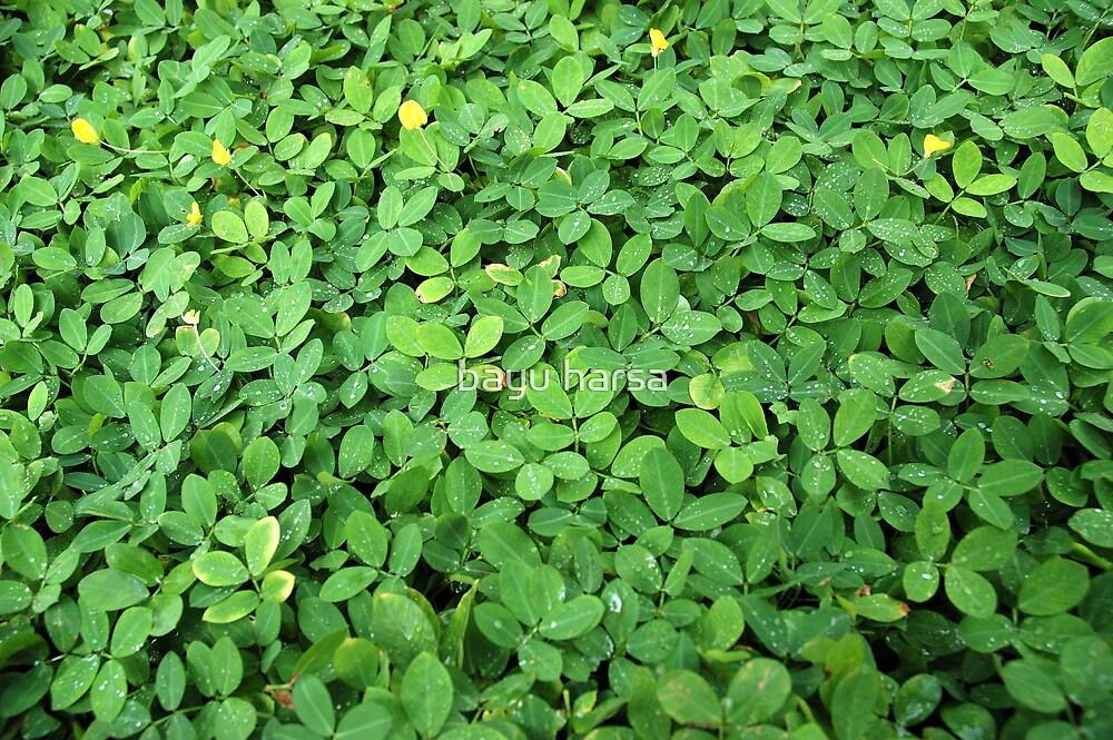 green leaf by bayu harsa