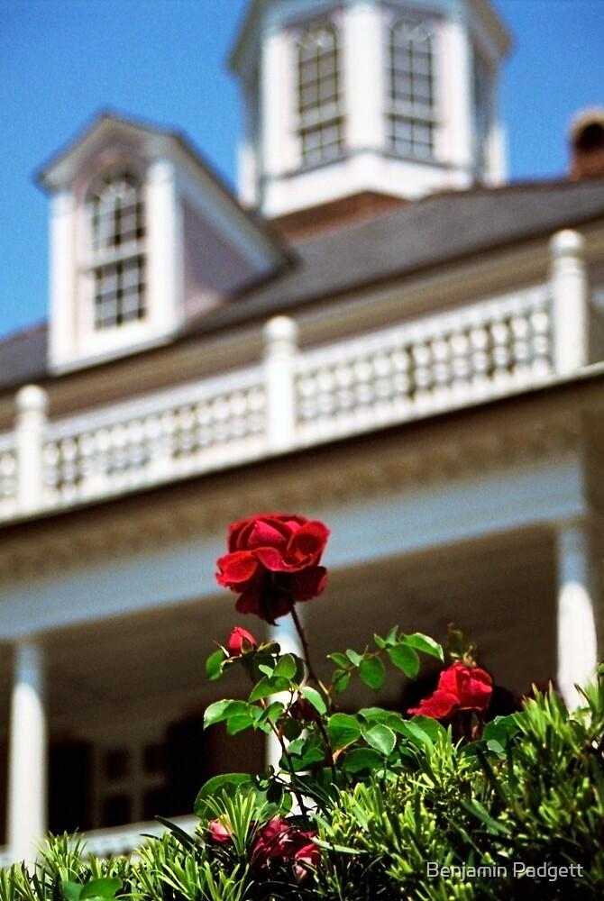 South Battery Rose by Benjamin Padgett