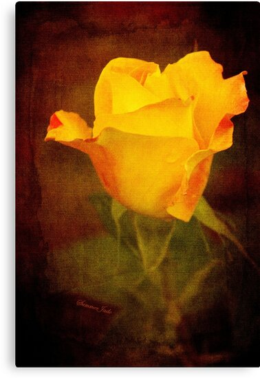 Rosebud Painted on Velvet by SummerJade