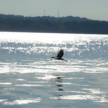 Blue Heron on Onondaga Lake by kdugan01