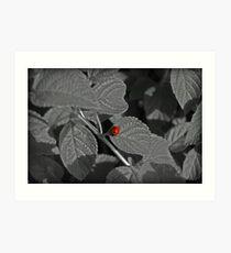 Black White & Red All Over Art Print