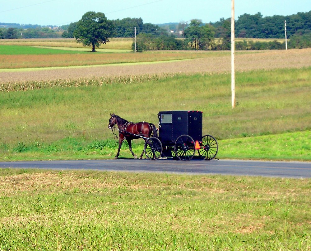 Horse and Buggy by Mindy Miller