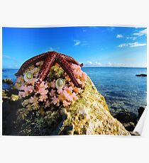 Red Starfish with Pink Corals Poster