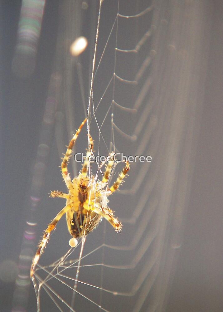 Web Spinning (4) by ChereeCheree