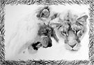 Feline disappointment (lions) in pencil by Phenglar