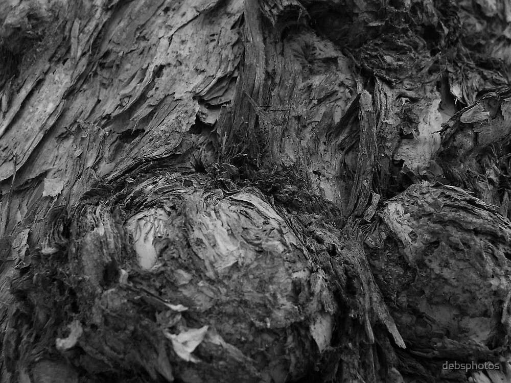 """Knarly Paperbark"" by debsphotos"