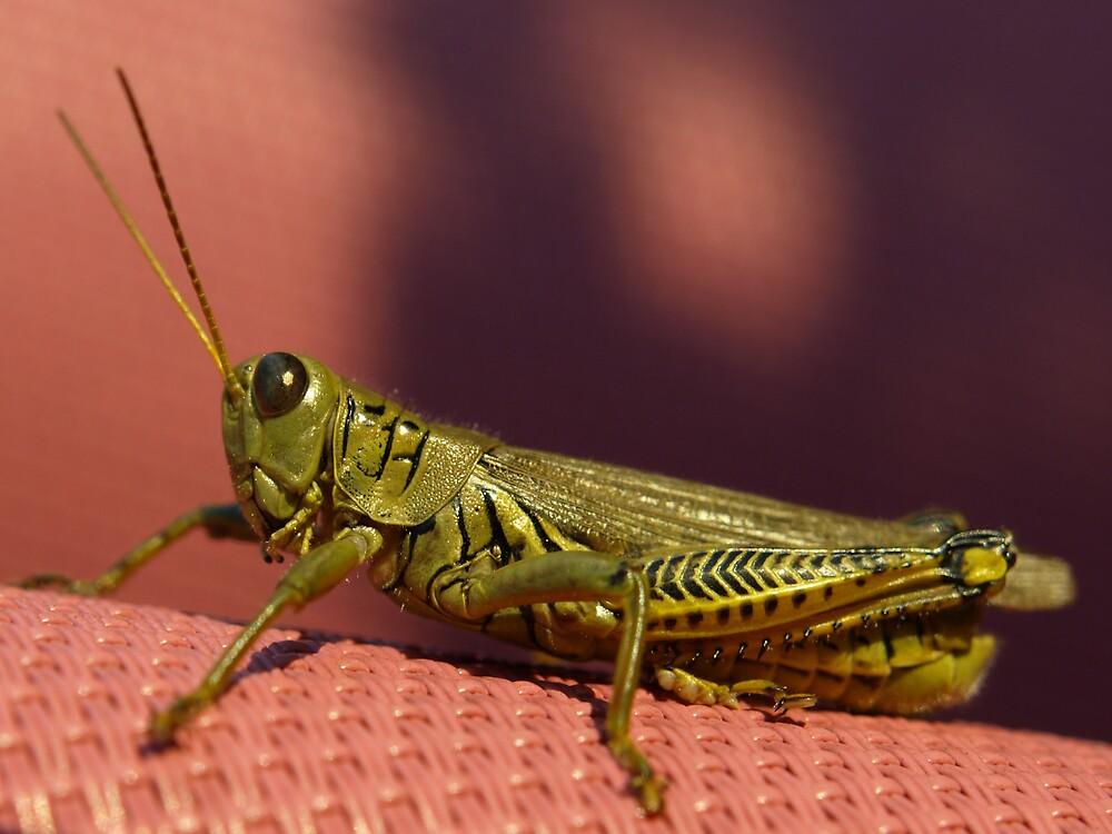 Grasshopper by JThill
