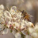 Bee by yolanda