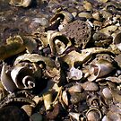 Abandoned Sea Shells by Peter L