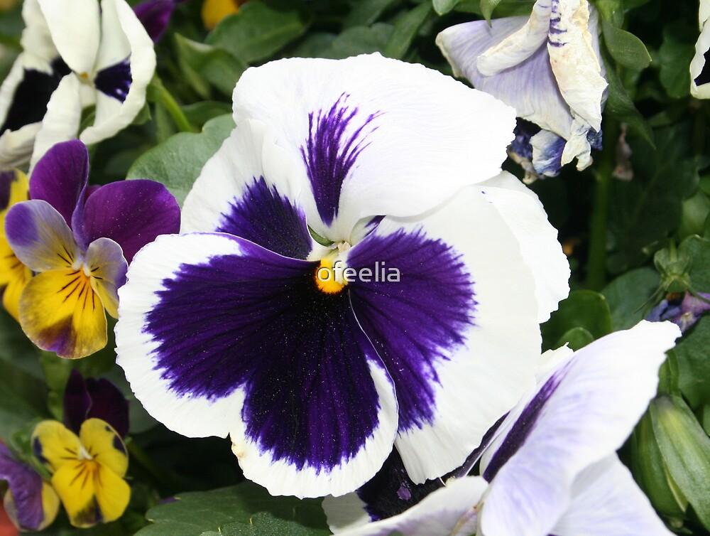 purple smile by ofeelia