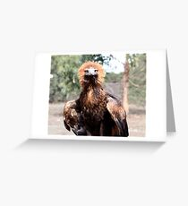 Young Wedge-Tailed Eagle Greeting Card