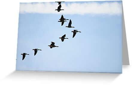 Brent Geese  by CjbPhotography