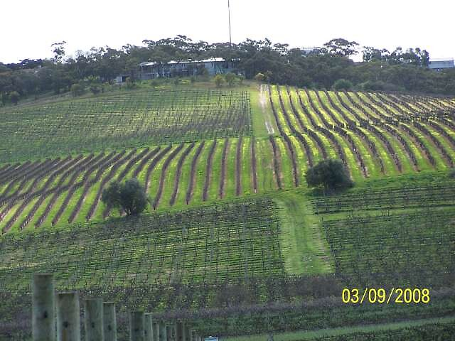Spring in vineyards. by mclarenvale