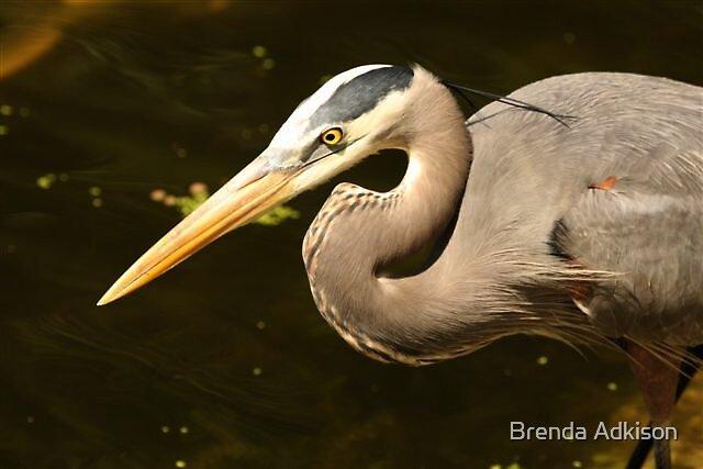 Blue Heron by Brenda Adkison