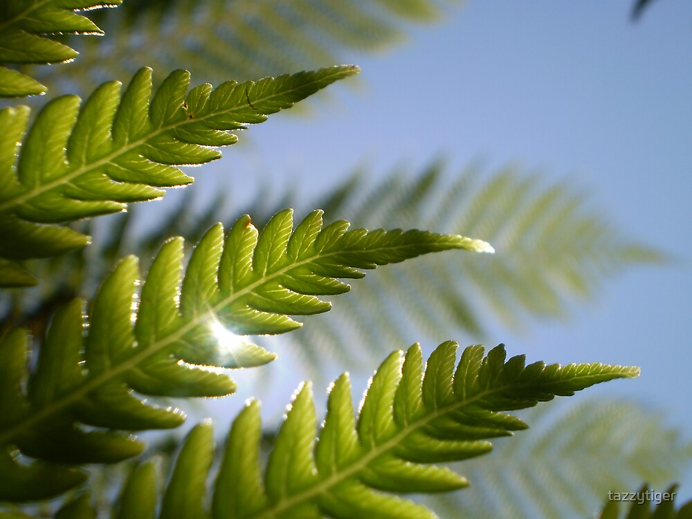 Frond & Shine by tazzytiger