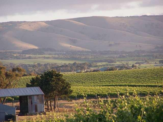 McLaren Vale vineyards. by mclarenvale