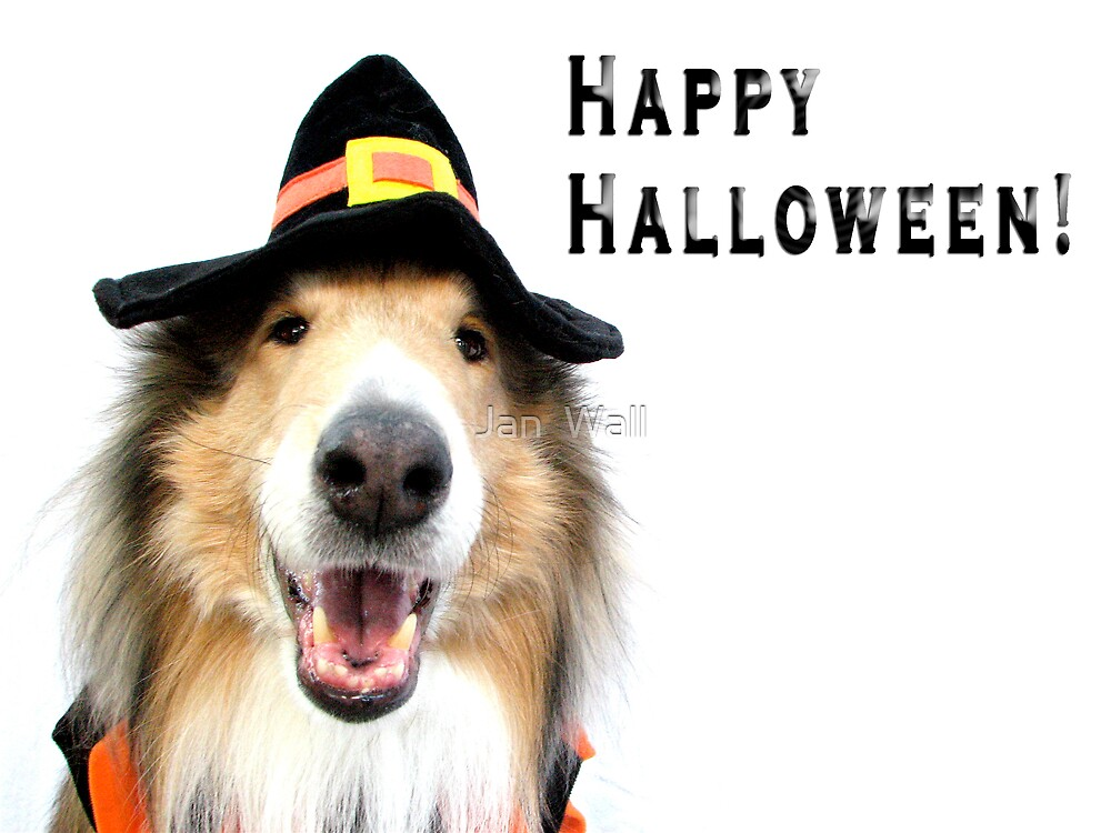 Happy Halloween Collie by Jan  Wall