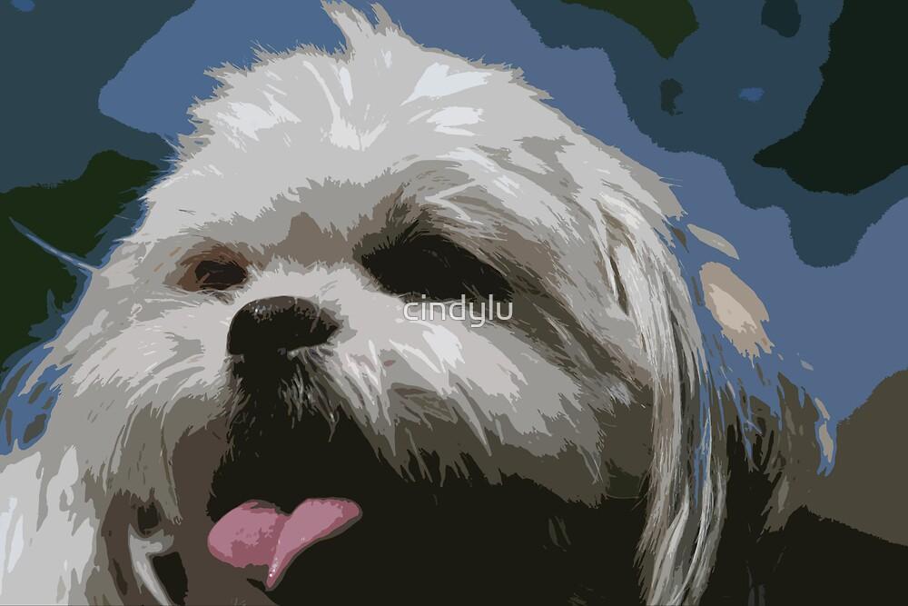 Shaggy Dog by cindylu