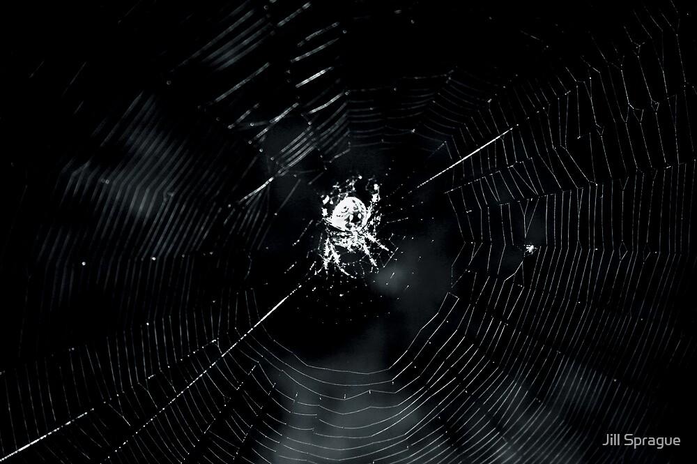 Spiderman by Jill Sprague