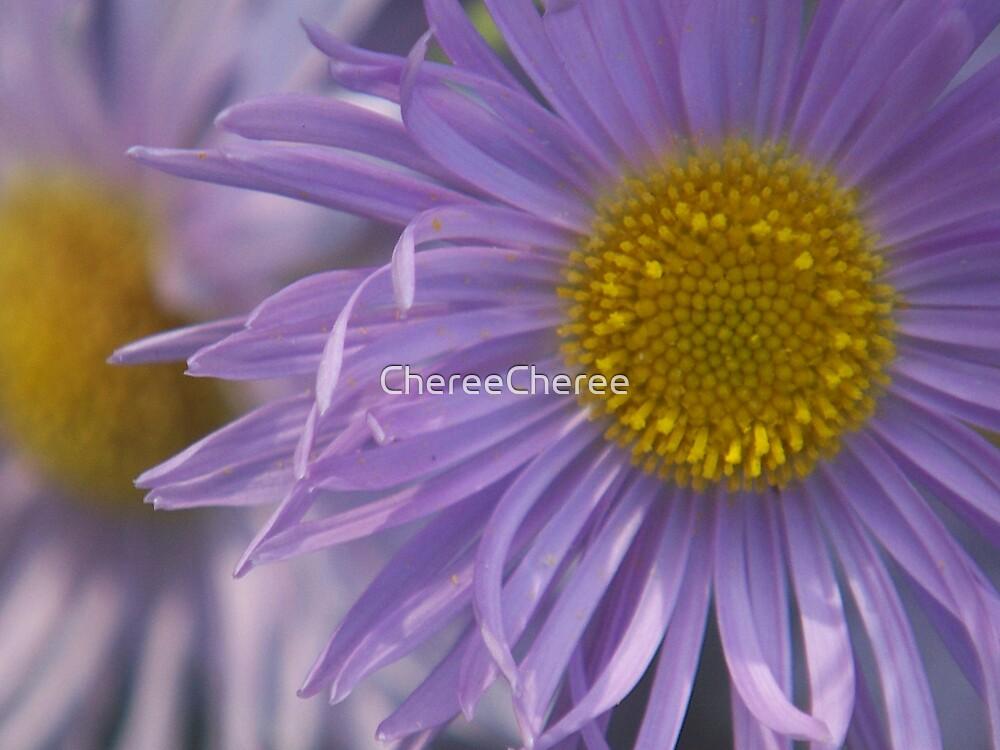 Purple Aster by ChereeCheree