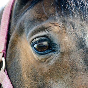 Pferdeauge by pASob-dESIGN