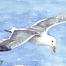 Jonathan, the Seagull by Maree Clarkson