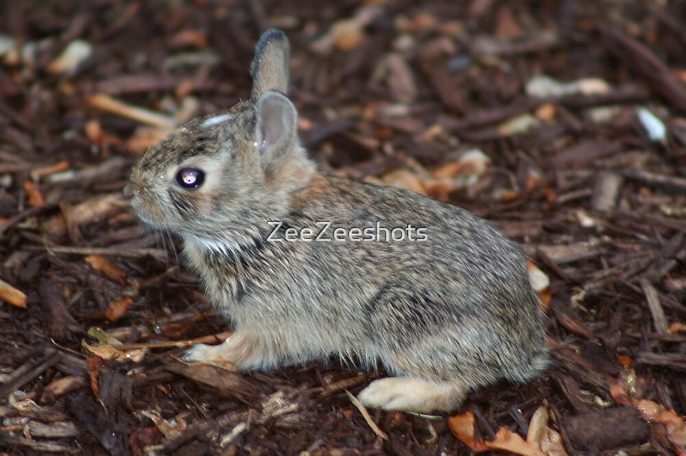 Baby Rabbit by ZeeZeeshots