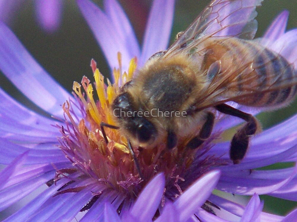 Asters & Bee by ChereeCheree