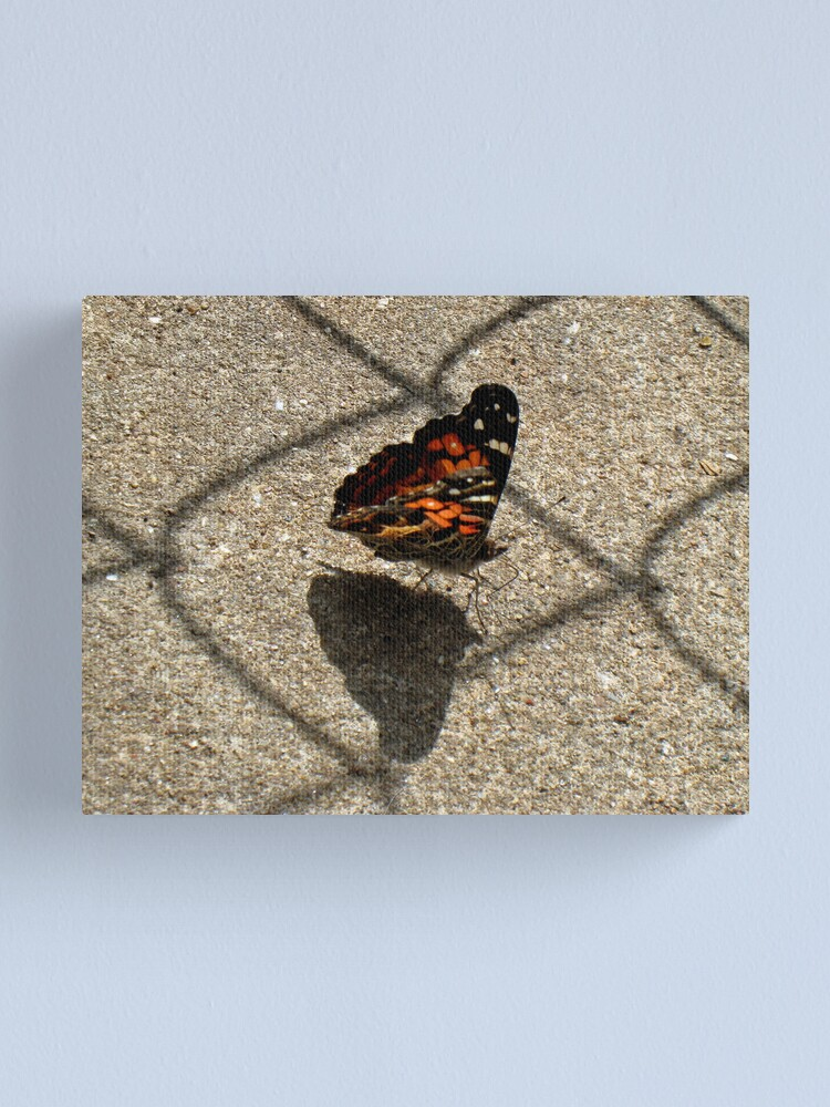 Alternate view of American Beauty Butterfly Canvas Print