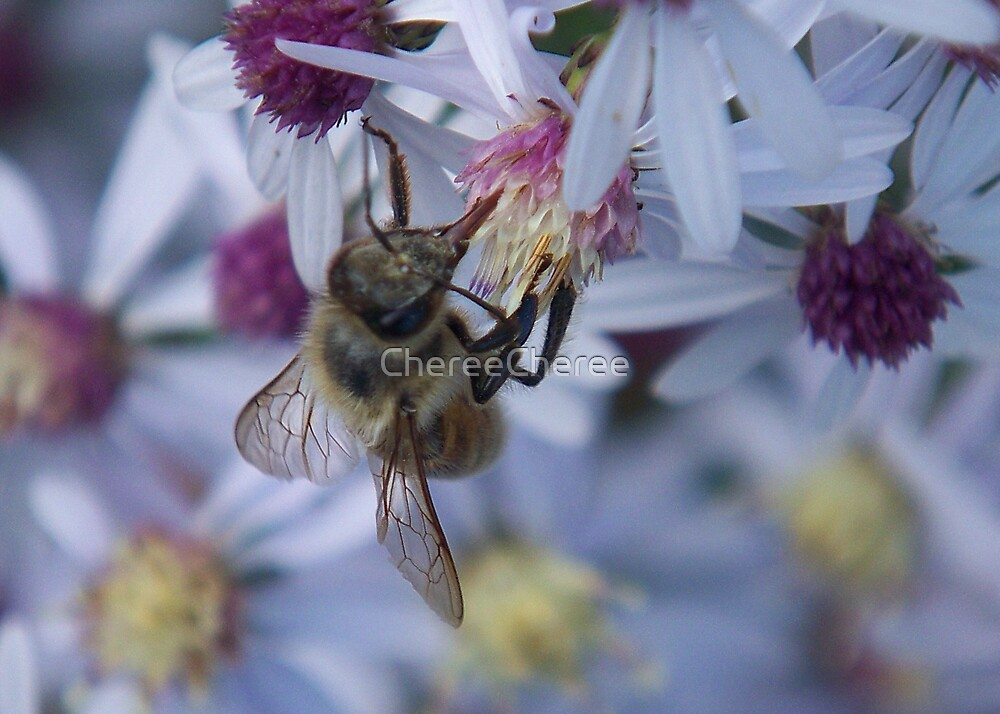 Pollenation by ChereeCheree