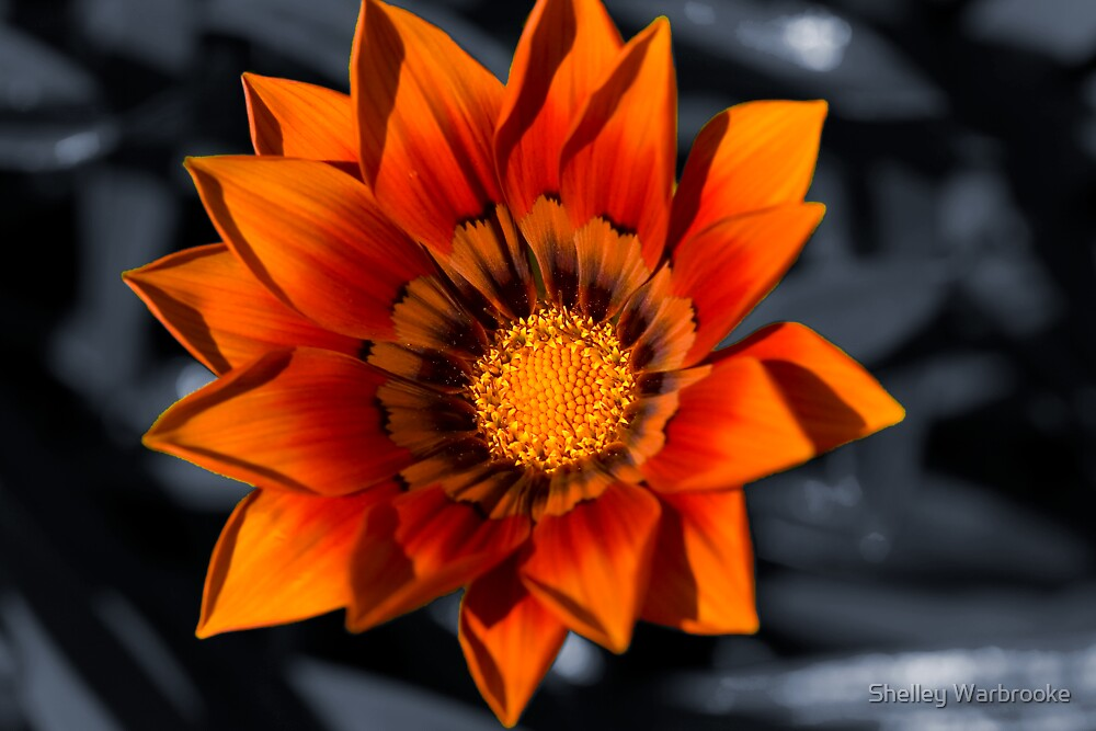 Ray of Sun by Shelley Warbrooke