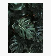 Monstera Deliciosa Leaves Photographic Print