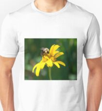 Bumble Bee on Oxeye Sunflower T-Shirt