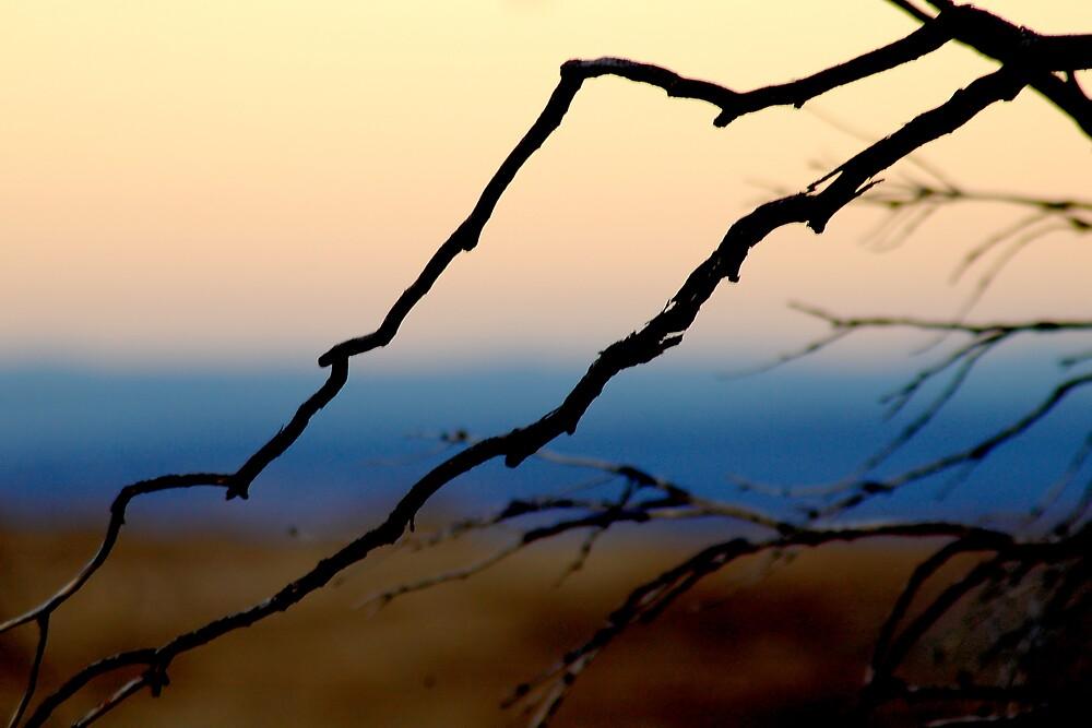Sunset Branch by Benn Hartung