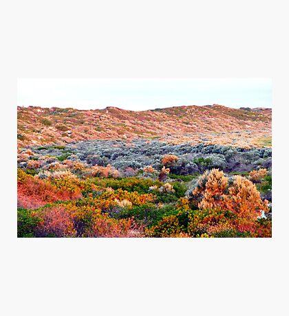 Sunset Dunes Photographic Print