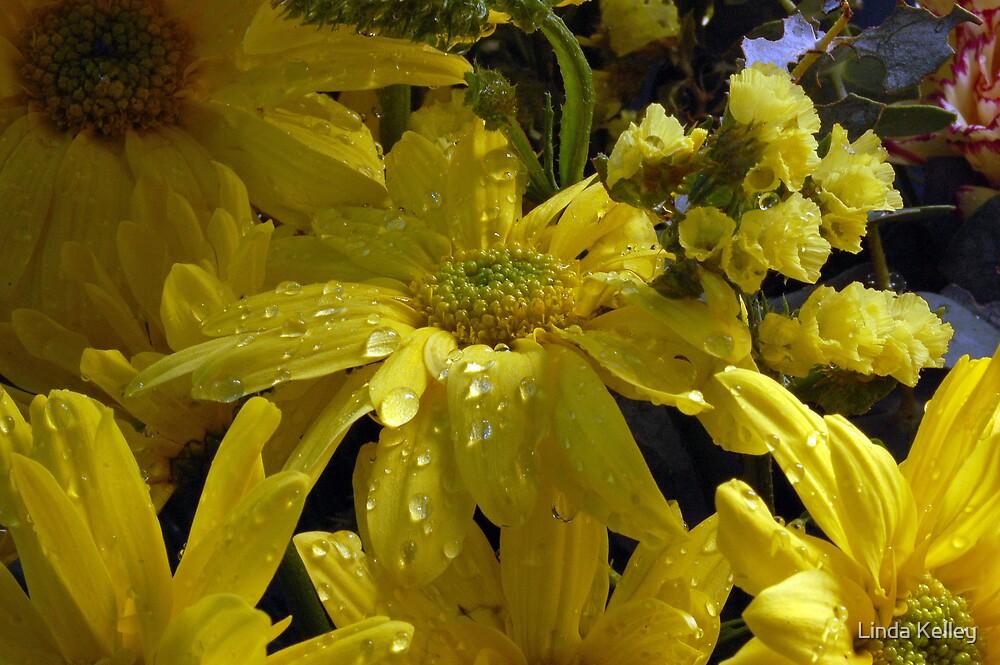 daisy in the sun by Linda Kelley