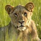 Pride Successor  by Leon Rossouw