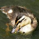 Duckling #2 by Trevor Kersley