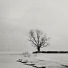 Ash tree Buttermere  Winter by marshall calvert  IPA