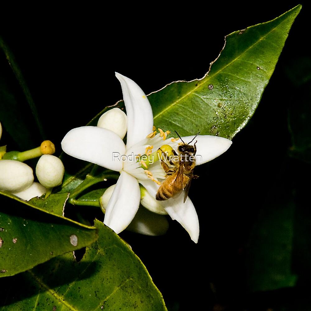Bees by Rodney Wratten