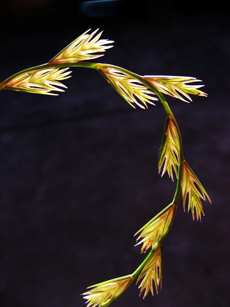 Beautiful stalk by SarahTrangmar