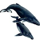Humpback Whale Cow & Calf by Matthew Messina